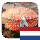 KinoPad Dutch - Image Search