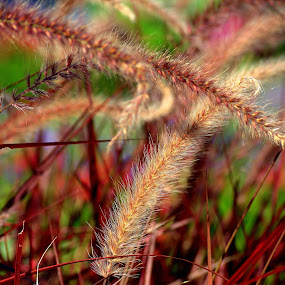 by John Hale - Nature Up Close Leaves & Grasses (  )