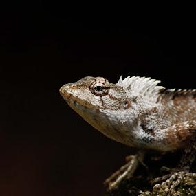Lizzzzzard by Praveen Kumar - Animals Reptiles