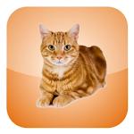 Cat Screen Cleaner