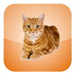 Cat Screen Cleaner 1.0 Apk