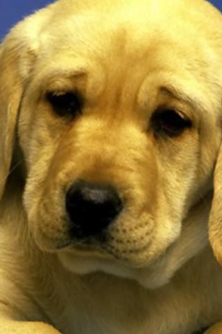 Wallpaper Cani e Animali HD