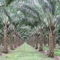 Oil Palm Land Valuation Calc