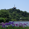 Japan:Sankei Garden :Yokohama icon