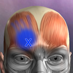 Muscle Trigger Point Anatomy 2.4.4 (Paid)