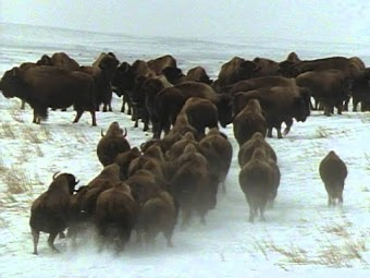 People of the Bison