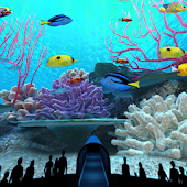 Coral Reefs World