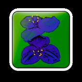 Garten: Gemüsepflanzen Frei