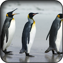 Penguin wallpapers icon
