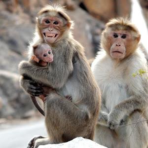 pixoto monkey.jpg