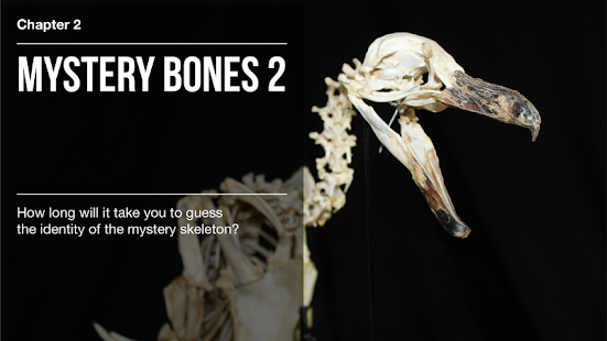 BBC Secrets of Bones- screenshot thumbnail