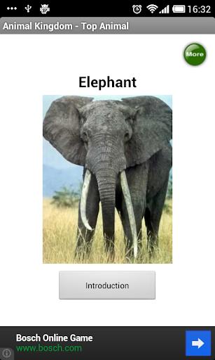 Animal Kingdom - Top Animal