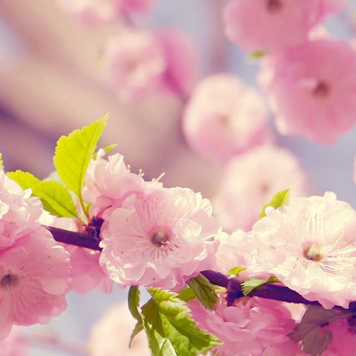 벚꽃 퍼즐 休閒 LOGO-玩APPs