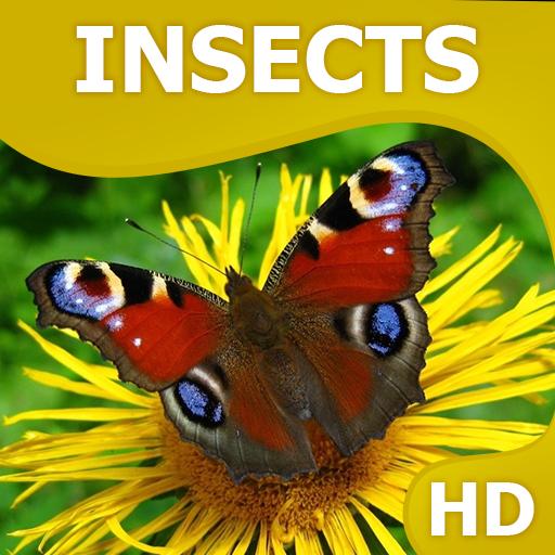昆虫壁纸HQ 個人化 App LOGO-APP開箱王