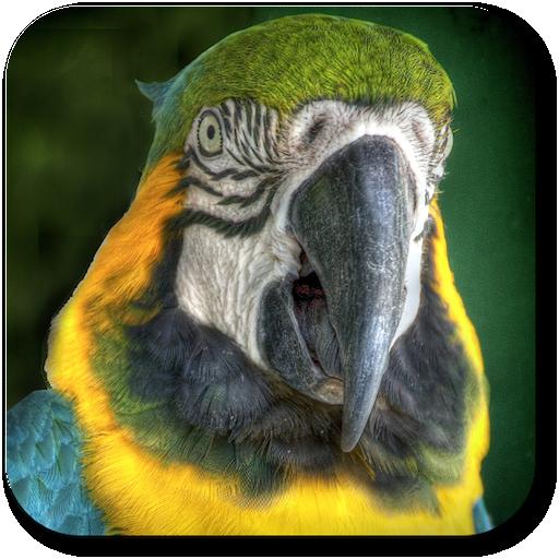 Parrot Voice Changer Full Ver.
