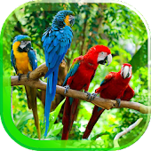 Parrot Voices live wallpaper