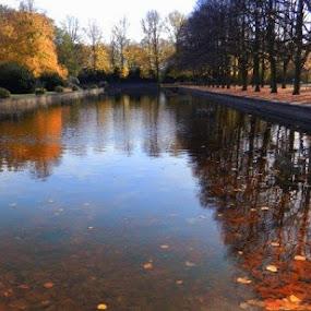 The Lake in Autumn by Nat Bolfan-Stosic - City,  Street & Park  City Parks ( park, autumn, lake, leaves, city )