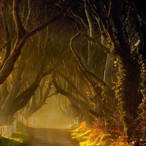 by Leslie Hanthorne - Landscapes Forests