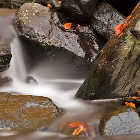 Glen Artney Stream by Nicolas Raymond - Nature Up Close Water ( dreamy, seasonal, stone, rock, vibrant, flow, travel, yellow, leaves, colour, colourful, nature, fluid, autumn, movement, maryland, patapsco valley, motion, black, blurs, patapsco valley state park, orange, boulders, colors, white, tourism, united states, somadjinn, colours, season, scene, stream, smooth, america, colorful, waterscape, rocky, vivid, waterfall, state, boulder, valley, blur, landscape, usa, glen, patapsco valley park, nicolas raymond, fresh, long exposure, rocks, closeup, water, streaming, patapsco, park, flowing, green, scenic, close up, close-up, artney, soft, blurred, red, color, fall, vibrance, background, falls, brown, scenery, stones, river,  )