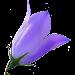 Idaho Wildflowers Icon