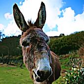 Donkey Sound Effects