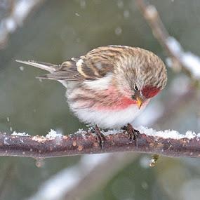 by Hilde Lorgen - Animals Birds