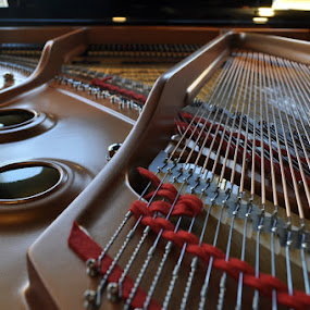 Inside a Baby Grand by Brad Chapman - Artistic Objects Musical Instruments ( music, baby grand, musical instrument, piano, instrument, close up, object, musical,  )