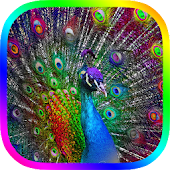 Peacock Live Wallpaper