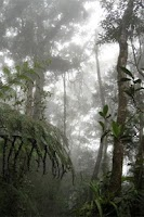 Screenshot of Lightning Bug - Jungle Pack