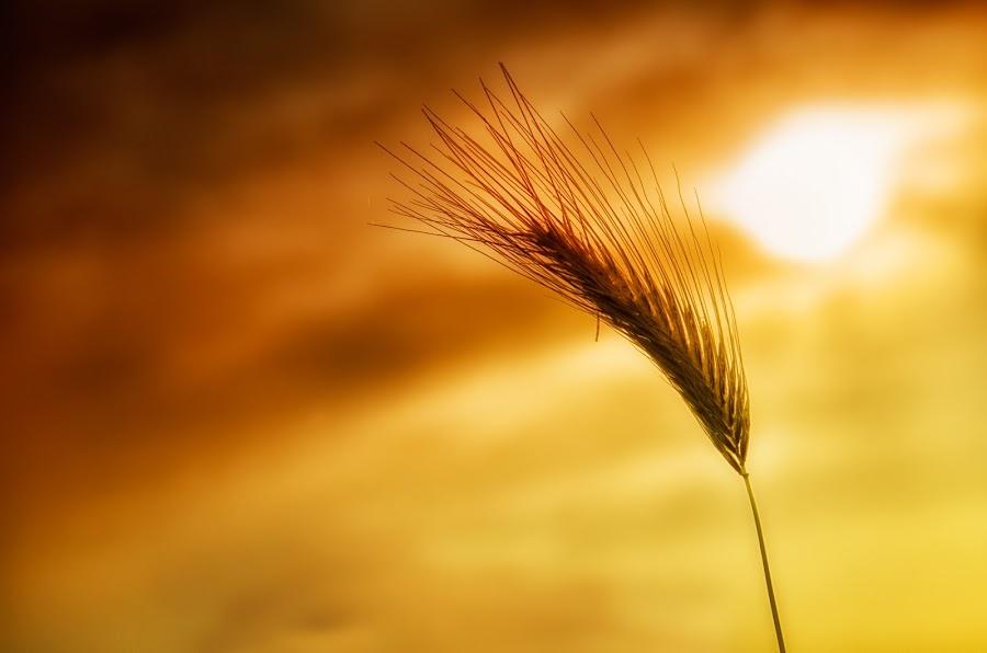 Sunset... by Sandro Manicone Profilo Artistico - Landscapes Sunsets & Sunrises ( sunset sunrise nature plants )