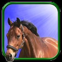 Horse Live Wallpaper 5.1