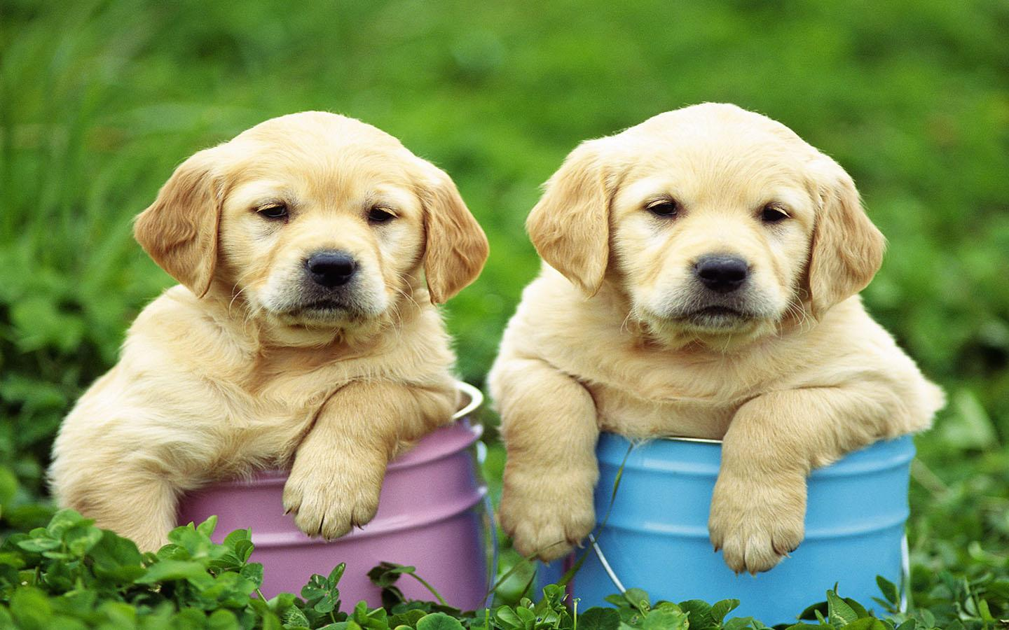 puppy wallpaper android apps on google play