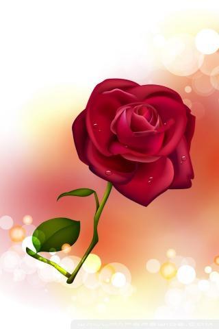 Valentine Day Flower 4 U