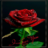 Rose I Love You Live Wallpaper