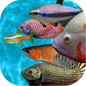Tropical fish racing game logo