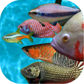 Tropical fish racing game