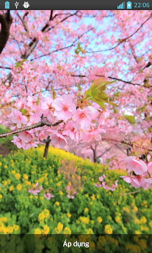 Sakura Falling Live Wallpaper|玩個人化App免費|玩APPs