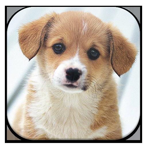 Nombres de Perros LOGO-APP點子