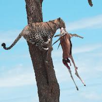 Hunters & Animal Food Habits