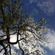 Trees & Shrubs of Southeast Texas