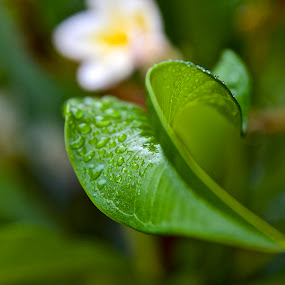 Rain drops in my garden by Rita Jaber Youssef - Nature Up Close Leaves & Grasses