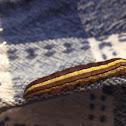 Striped Garden Caterpillar