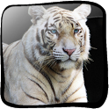Tiger White 3D icon