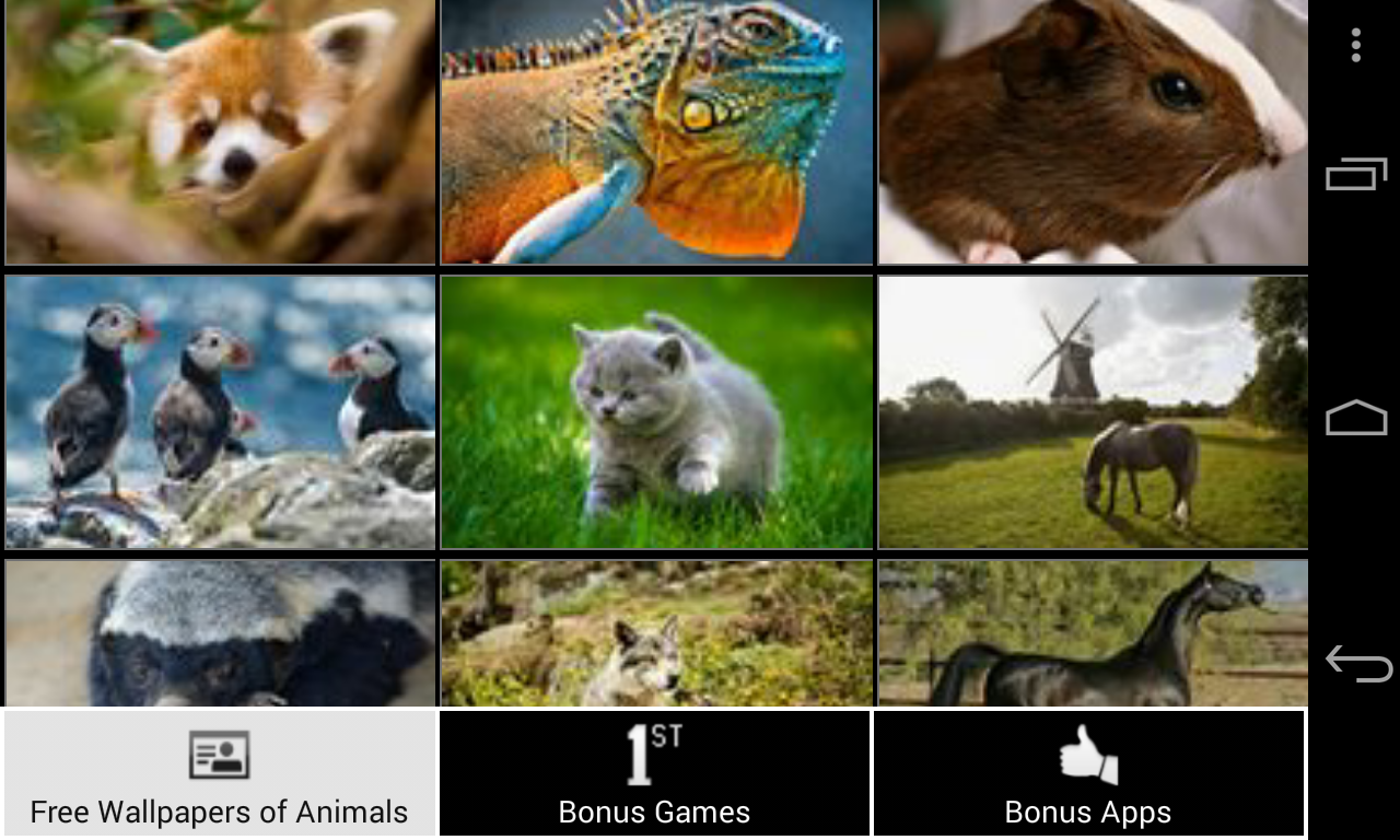 free wallpapers of animals hd screenshot - Free Pics Of Animals