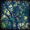 Borboleta (butterfly)