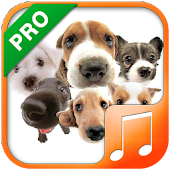 Dog Sounds & Ringtones Pro