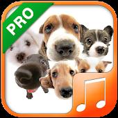 Dog Sounds & Ringtones Pro