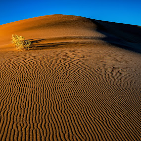 Pristine Beauty by Johan Jooste Snr - Landscapes Deserts ( tuft of grass, namib desert, desert, sand-patterns, textures, dune, namibia, light and shadow )