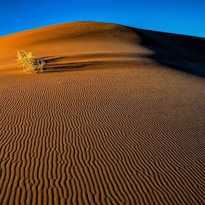 20130718-Namib Desert Photo Tour-488.jpg