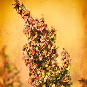 Blossom by Ron Pierce - Flowers Flowers in the Wild ( wild, vintage, color, artistic, flowers )